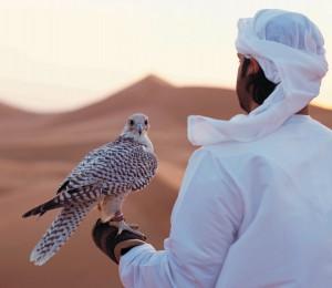 Falke Wueste Abu Dhabi