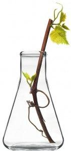 Caudalie Pflanze