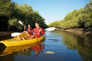 ras-al-khaimah-tourism-kayaking-mangroves